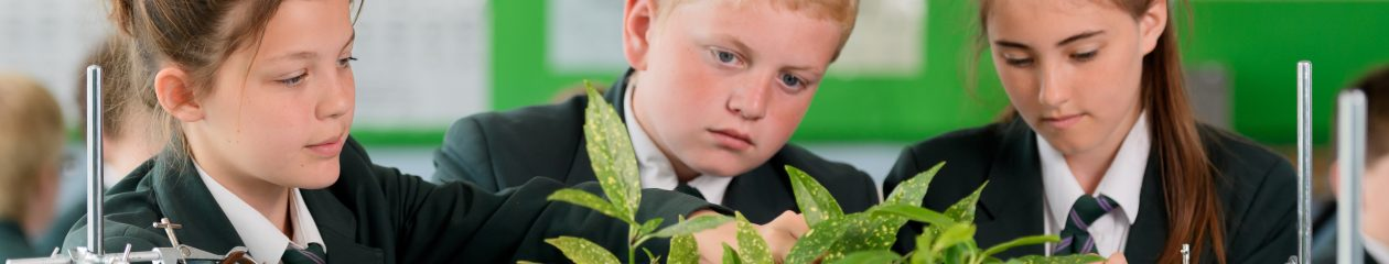 Southam College Year 6 Blog